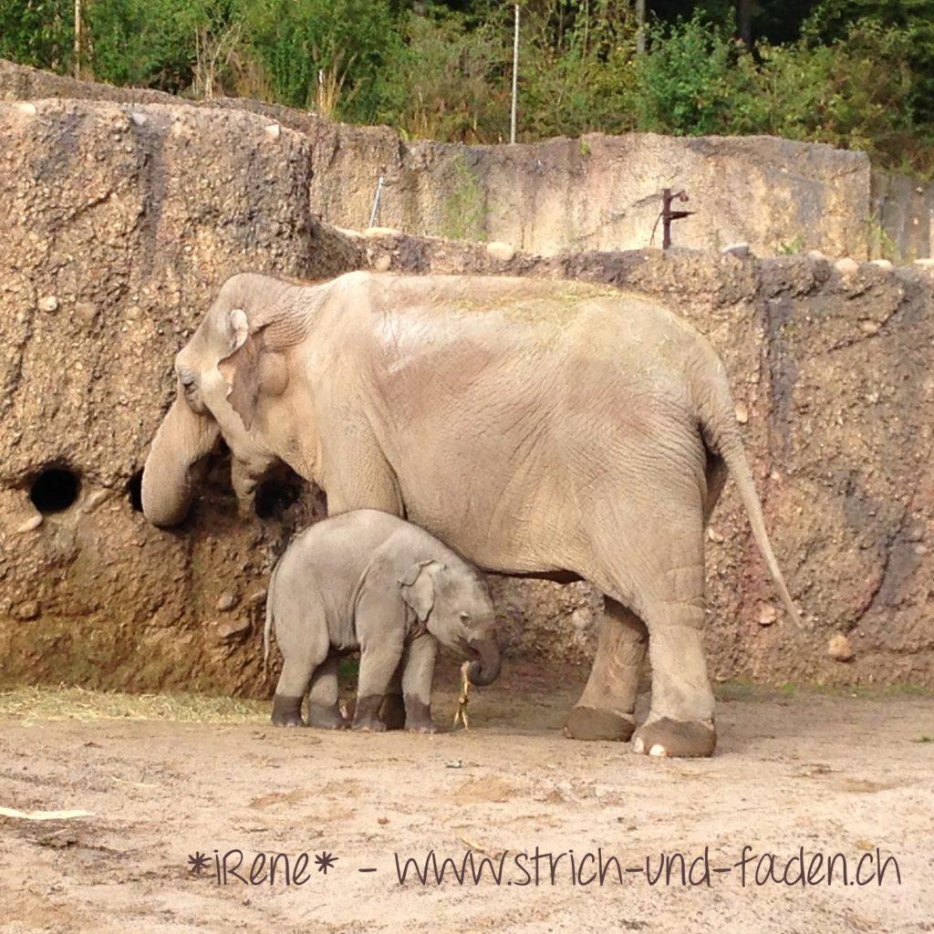 mit Strich und Faden | Elefanten Zoo Zürich