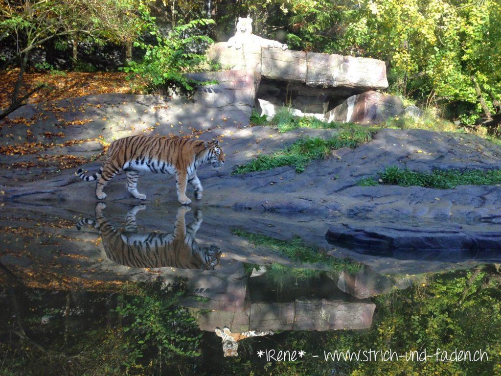 mit Strich und Faden | Zoo Zürich Tiger