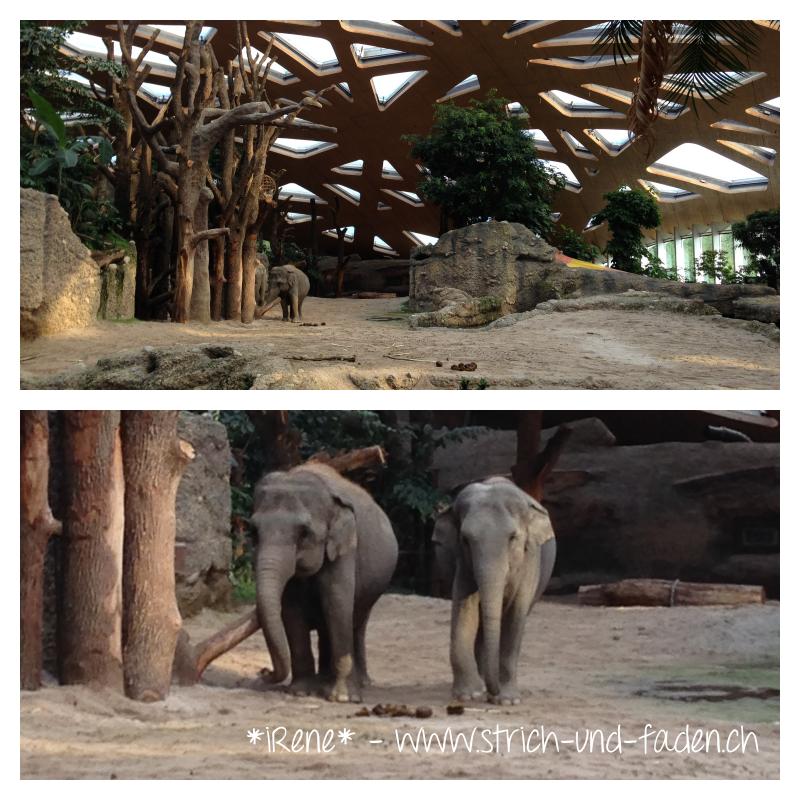 mit Strich und Faden | Elefantengehege innen Zoo Zürich
