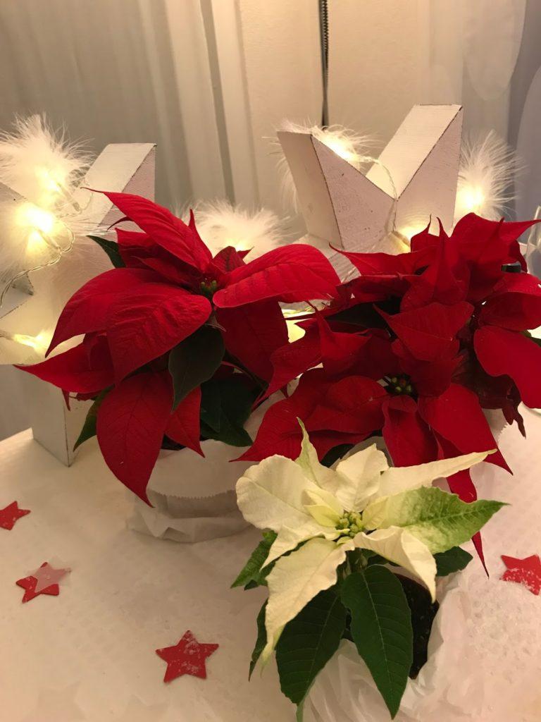 mit Strich und Faden: Weihnachtssterne