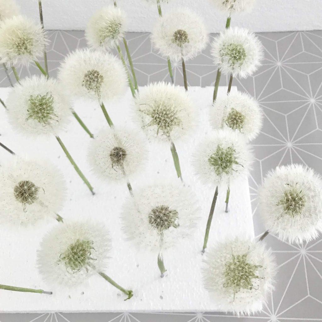 mit Strich und Faden: Pusteblumen geöffnet