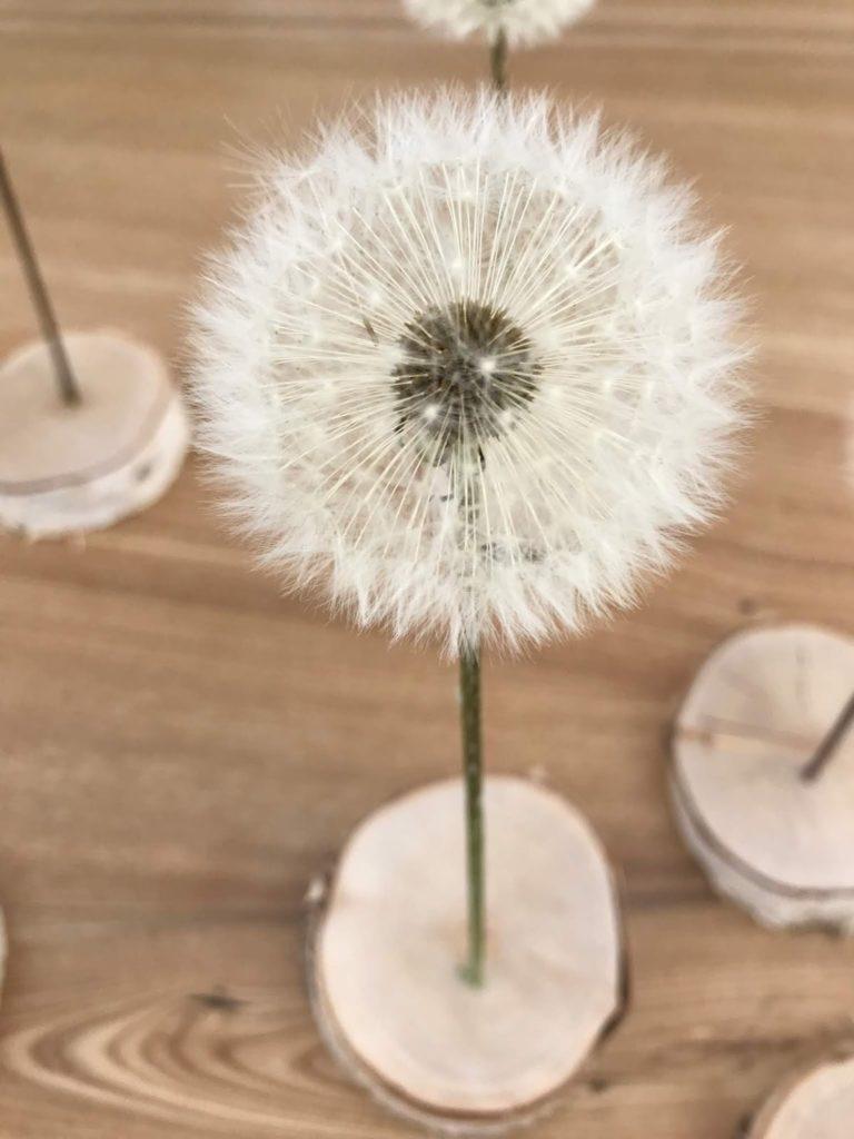 mit Strich und Faden: Pusteblume haltbar